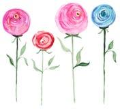 De waterverf nam bloemen toe stock illustratie