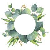 De waterverf om kroon met eucalyptus gaat weg en vertakt zich vector illustratie