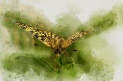 De waterverf schilderde mooie vlinder stock illustratie