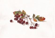 De waterverf van Ashberry het schilderen