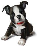 De waterverf van Boston Terrier het schilderen stock illustratie