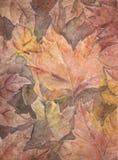 De waterverf van de herfstbladeren Stock Afbeeldingen