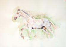 De waterverf van het Perlino akhal-teke paard het schilderen royalty-vrije stock fotografie