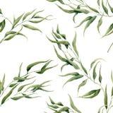 De waterverfeucalyptus verlaat naadloos patroon op witte achtergrond Bloementextuur voor ontwerp, textiel en achtergrond Stock Foto's