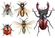 De waterverfillustratie van de insectinzameling, op wit wordt geïsoleerd dat royalty-vrije stock afbeeldingen