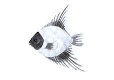 De waterverfvissen, geschilderde hand trekken vector illustratie