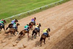 De weddenschap van het paardenrennenspel Stock Foto's