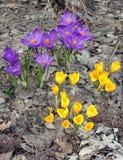 De Wedergeboorte van de lente Royalty-vrije Stock Fotografie