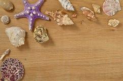 De weekdieren op houten lijst sluiten omhoog Zeeschelpen op een oude houten lijst met exemplaarruimte voor tekst stock foto