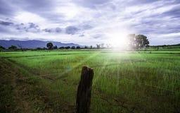 De weelderige groene ochtendzonsopgang maakt u gevoel verfrist tegelijkertijd stock fotografie