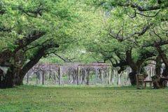 De weelderige perzik van de Tuin Royalty-vrije Stock Fotografie