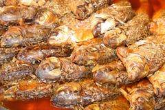 De weerhaak van Java of Zilveren weerhaakvissen in diepe sausboilin Stock Afbeelding