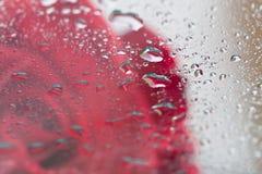 De weerspiegeling van rood nam op glas toe Royalty-vrije Stock Fotografie