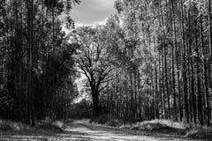 De weg aan de boom stock foto's