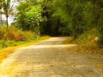 De weg aan een dorp met een rij van bamboebomen op de rand stock fotografie