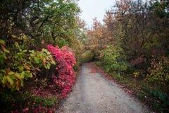 De weg aan het bos de weg aan de tuin royalty-vrije stock foto