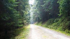 De weg aan het feebos stock afbeeldingen