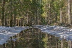 De weg aan het nette bos langs de randen van de weg, de sneeuw smelt en vormt een grote vulklei waarin het bos wordt weerspiegeld royalty-vrije stock afbeeldingen