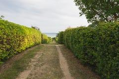 De weg aan het overzees, een omheining van struiken, een perspectief Eiland Rugen, Duitsland, de Oostzee stock afbeeldingen