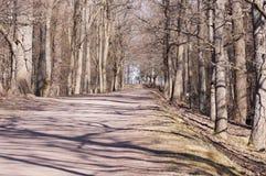 De weg aan het overzees in het park Royalty-vrije Stock Afbeeldingen
