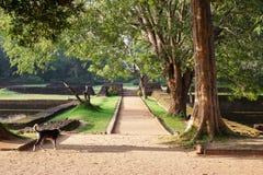 De weg aan het plateau in het park onder de eerstgenoemden tuiniert met fonteinen royalty-vrije stock foto