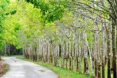 De weg aan het rubberboomlandbouwbedrijf Royalty-vrije Stock Fotografie