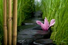 De weg & de bloem van de steen Royalty-vrije Stock Afbeeldingen