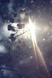 De weg in bos en lichte uitbarsting verwerkte beeld als fantasie of magisch concept Stock Foto's