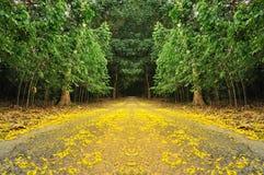 De weg in de Daling Stock Fotografie