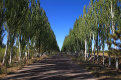 De weg in de herfst Royalty-vrije Stock Afbeelding