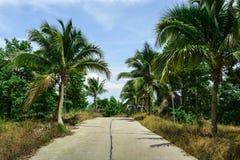 De weg in de keerkringen door palmen worden omringd die Royalty-vrije Stock Foto