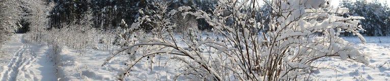 De weg in de winterbos. Royalty-vrije Stock Afbeeldingen