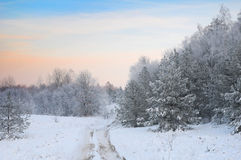 De weg in de winterbos stock afbeeldingen