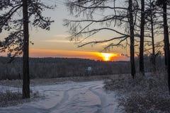 De weg in de winterbos bij zonsondergang Stock Afbeelding
