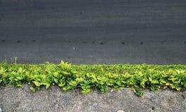 De weg dichtbij groene wal Royalty-vrije Stock Afbeeldingen