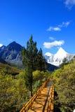 De weg die tot de sneeuwberg leidt Stock Foto