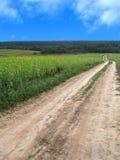 De weg die van de grond het zonnebloemgebied kruist Stock Foto