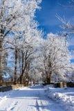 De weg die van de winter tussen de bevroren bomen lopen. stock foto's