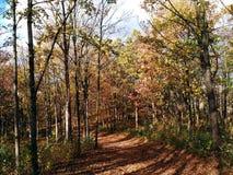 De weg door bos royalty-vrije stock foto