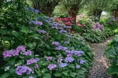 De weg door de hydrangea hortensia stock afbeeldingen