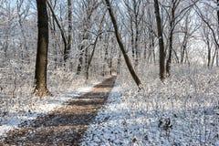 De weg door het bos royalty-vrije stock foto