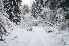 De weg door het de winterhout Royalty-vrije Stock Foto