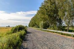 De weg door het gebied langs de berken stock afbeeldingen