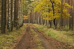 De weg door het herfstbos Stock Afbeelding