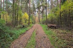 De weg door het herfstbos Stock Afbeeldingen