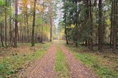 De weg door het herfstbos Royalty-vrije Stock Afbeelding
