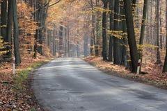 De weg door het herfstbos Stock Foto