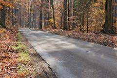 De weg door het herfstbos Royalty-vrije Stock Foto's