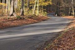 De weg door het herfstbos Royalty-vrije Stock Foto