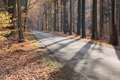 De weg door het herfstbos Royalty-vrije Stock Fotografie